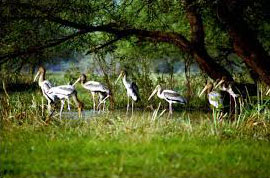 Ranthambore And Bharatpur Package Tour