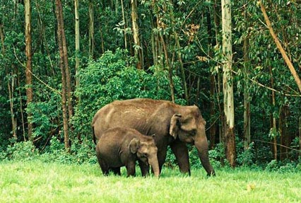 Kerala Wild Life Tour Packages