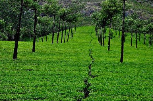 Kerala The Green Planet Tour