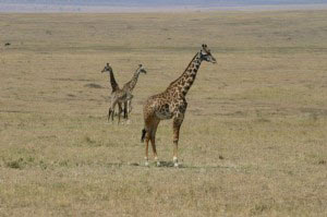 Great Rift Valley Masai Mara Camping Safari Tour