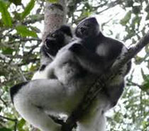 5 Days To See Lemurs In Madagascar