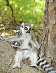 Discoveries And Relax In Madagascar Package
