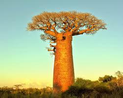 Madagascar Trek Tour