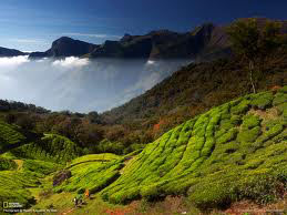 Munnar Honeymoon Package From Chennai
