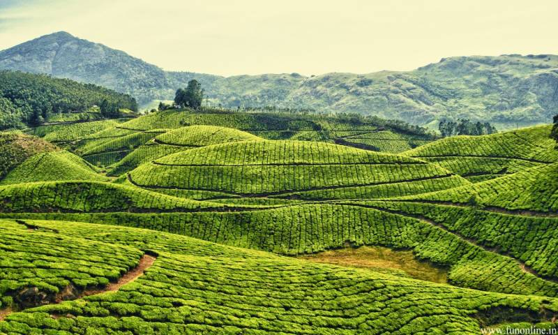 Munnar Honeymoon Package 4 Nights 5 Days