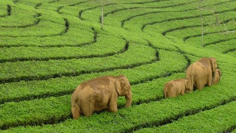Munnar Honeymoon Package 2 Nights 3 Days