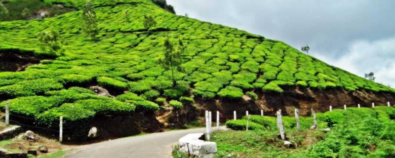 Kerala Honeymoon Package 9 Nights10 Days