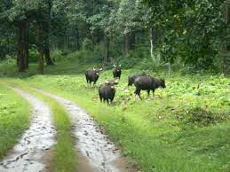 Kerela Wildlife Package