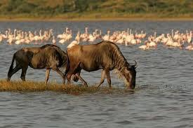 Kenya Wildlife Tour- 10 Days