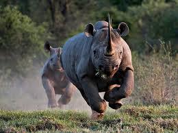 Kenya Wildlife Safar - 10 Days