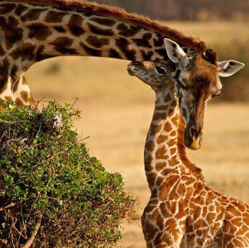14 Days Maasai Mara - Lake Naivasha - Lake Nakuru - Bogoria And Lake Baringo - Samburu Tour