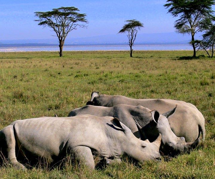 3 Days Tanzania Lodge Safari Ngorongoro/ Lake Manyara Lodge Safari Tour