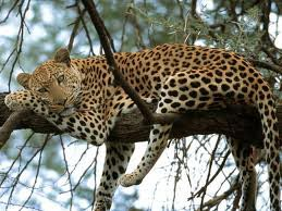 9 Days Kenya Wildlife Special Safari