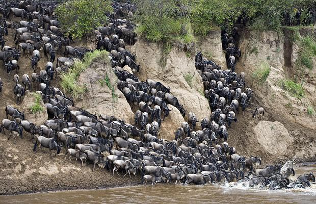8 Days Mara/Nakuru/Baringo/Naivasha/Amboseli Tour