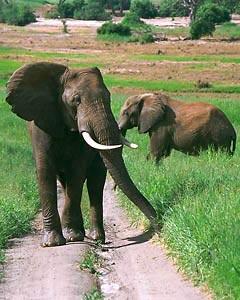 7 Days Kenya Lodge Safari Samburu - Baringo - Bogoria - Naivasha - Masai Mara Safari Tour