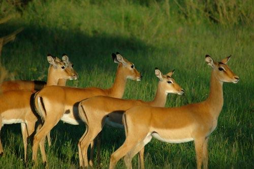11 Days Kenya Family Safari Tour