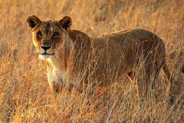 11 Days Kenya - Tanzania Safari Tour
