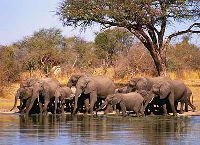 Victoria Falls And Chobe Tour