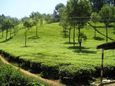 Ooty With Wayanad Tour
