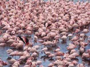 2 Day Lake Naivasha And Lake Nakuru Tour