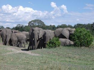7 Days Kenya Lodge Safari Tour