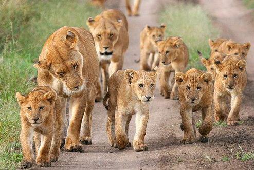 Africa Escape Safari
