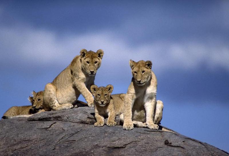 Kenya Discoverer Safari
