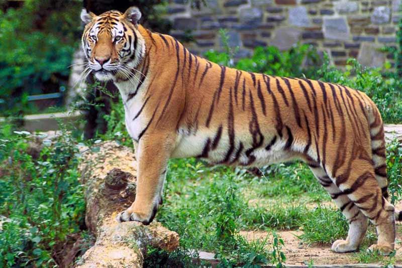 Mundanthurai Tiger Reserve Tour