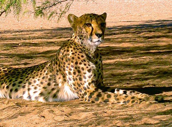 5 Day Johannesburg - Kruger National Park Tour