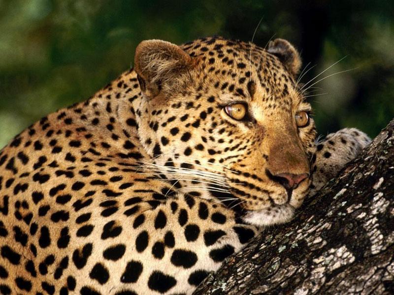 8 Day Johannesburg - Kruger - Coast Tour