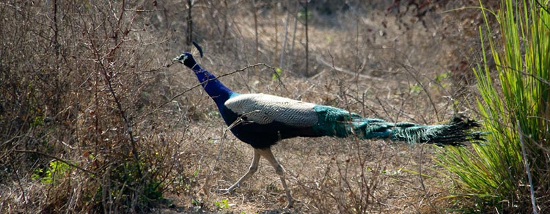 Bharatpur Bird Century Package