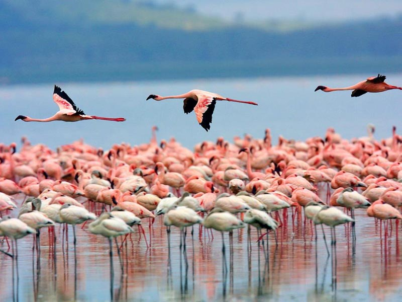 Lake Baringo - Lake Bogoria - Lake Nakuru - Maasai Mara Tour