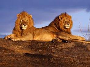 Tsavo East Safari Tour