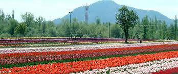 Jammu & Kashmir Holiday Tour Package