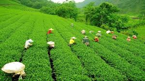 Sikkim With Darjeeling - Luxury Package