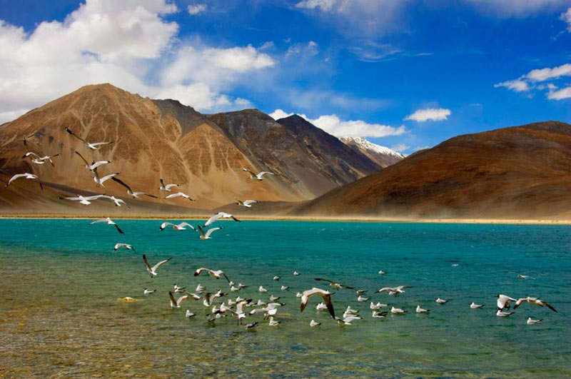 Leh - Nubra - Pangong Lake Tour