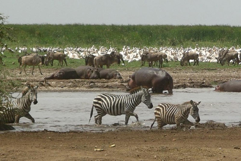 8 Days Tanzania Wildlife Safari And Zanzibar Safari
