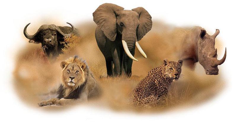 5 Days Lake Nakuru - Masai Mara Wildlife Safari Tour