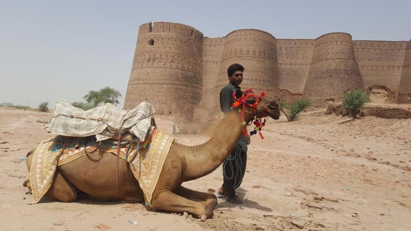 Cholistan Desert Camel Safari Tour