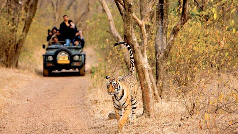 Ranthambhore - Jaipur Tour
