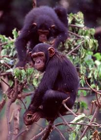 Kibale Forest Tour