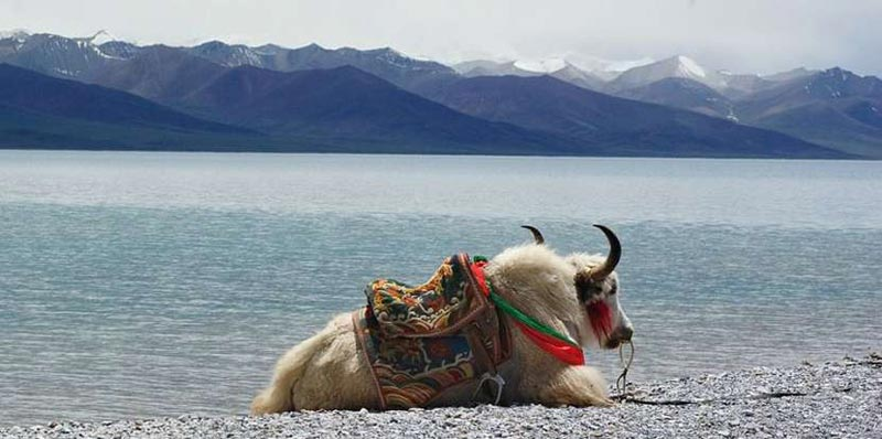 Lhasa , Namtso Lake And Tsedang Tour