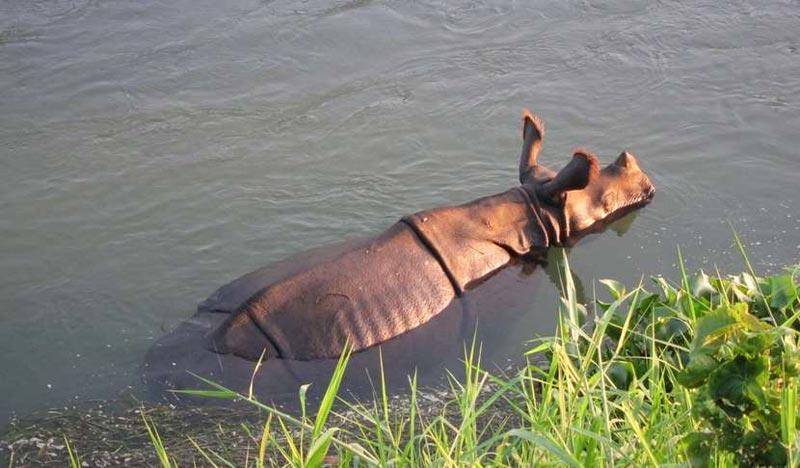 Jungle Safari In Chitwan Tour