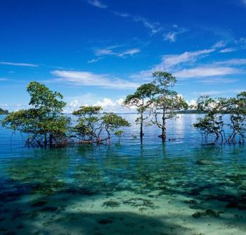 3 Nights Port Blair - 2 Nights Havelock Island - 01 Night Neil Island with Baratang Tour