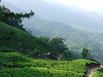 Explore Hill of Kerala Tour