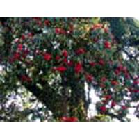 Darjeeling  Sandakphu Treks