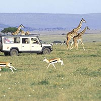 Best of Kenya Package