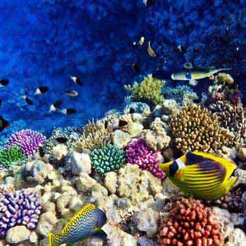 Oceanic Andaman Package