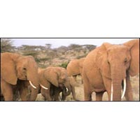 9 Days Aberdares, Samburu, Lake Nakuru, Masai Mara, Amboseli Tour
