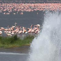 Four days 3 nights lake Nakuru, Lake Bogoria, Lake Naivasha.
